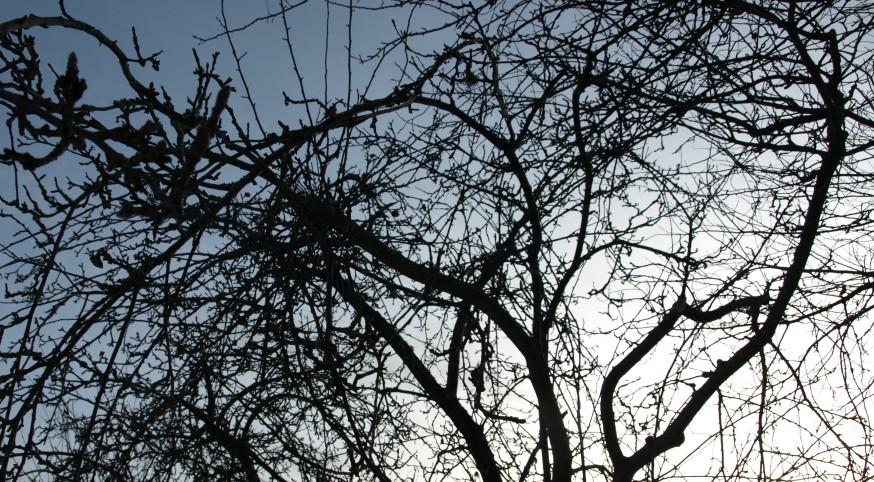 Under gamla äppelträd