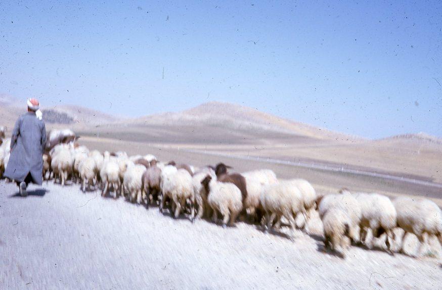 tunisien8-sodra-delen