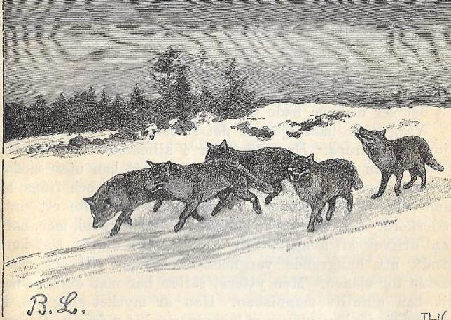 Vargar från Stata